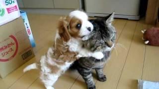 面白い動画cat & dog.jpg